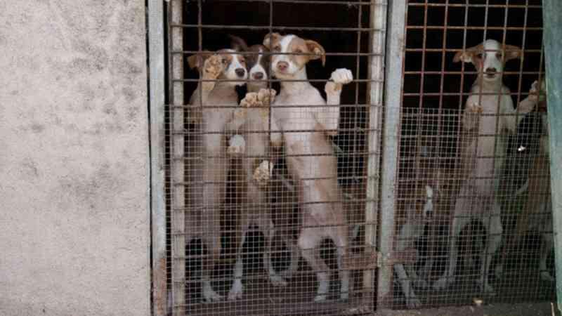 Jovem que matou cadela à pancada condenado a 13 meses de pena suspensa em Portugal