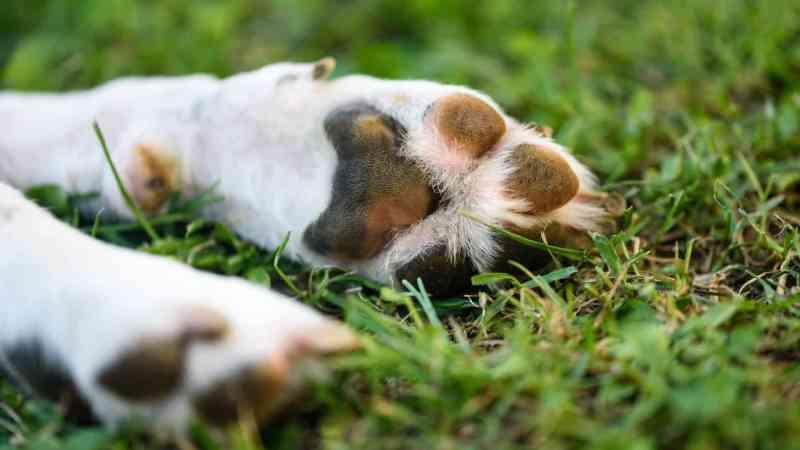Portugal: pena suspensa para jovem que matou cadela à pancada 'não é bom indicador'