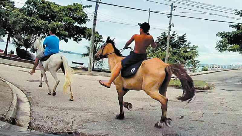 Aumenta denúncias de maus-tratos a cavalos na Ilha do Governador, no Rio