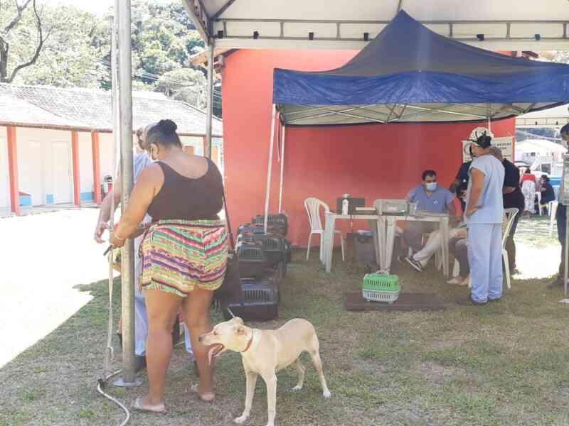 Castramóvel atende cerca de 250 animais no bairro do Caju, em Maricá, RJ