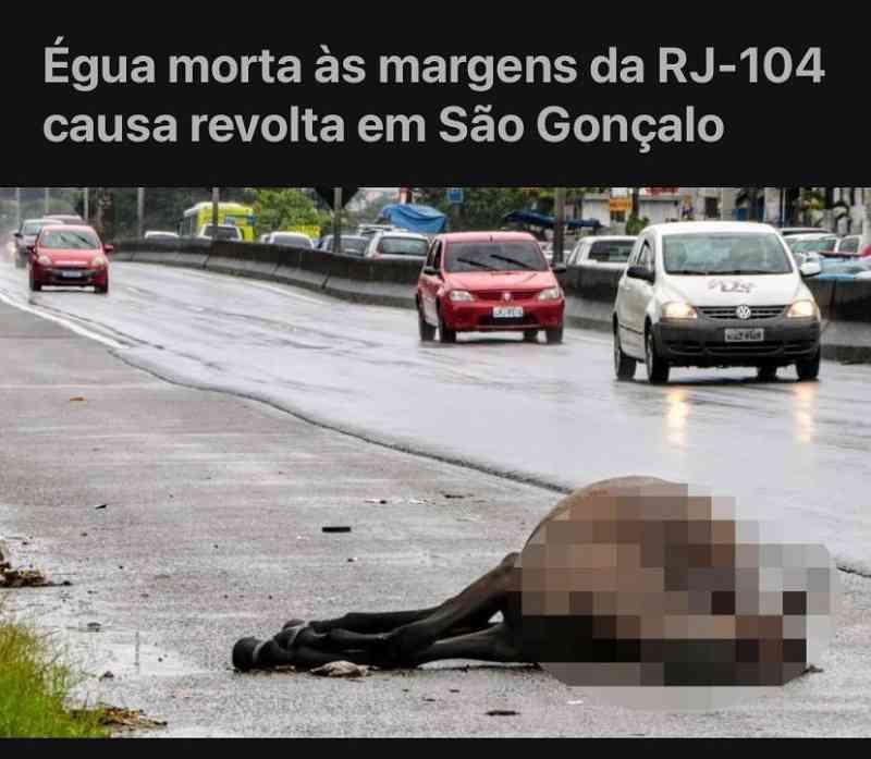 Égua morta às margens da RJ-104 causa revolta em São Gonçalo, RJ