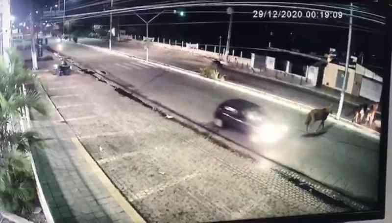Cavalos são atropelados na principal avenida da zona norte de Natal (RN); veja vídeo