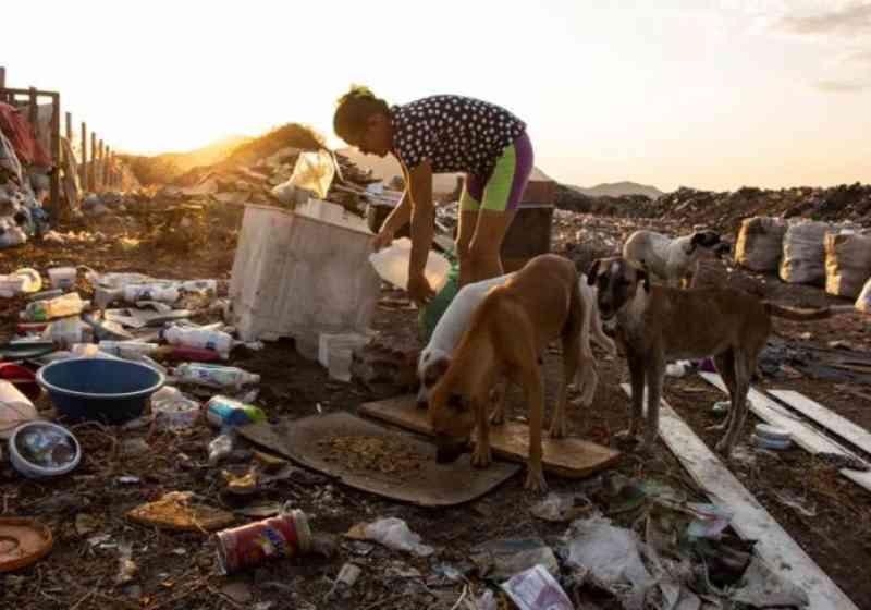 Mulher vai a lixão todo dia alimentar 40 animais abandonados: vídeo