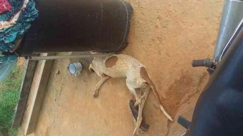 Cachorro é encontrado pela PM agonizando com suspeita de envenenamento em RO