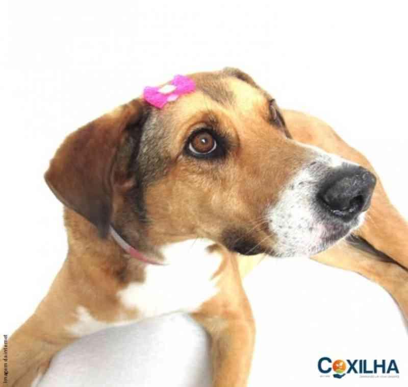 Município de Coxilha (RS) apresenta projeto para castração de cadelas em situação de abandono