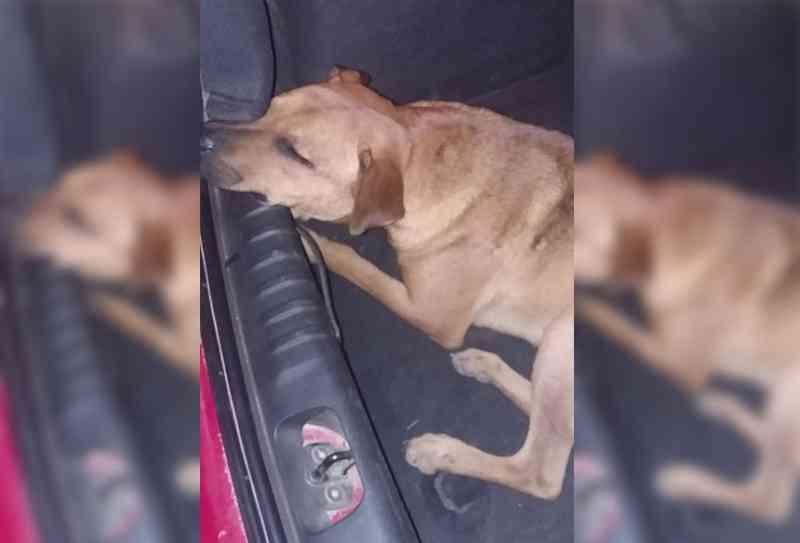 Cachorro é salvo de enforcamento em Dom Pedrito, RS