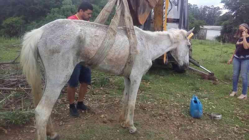 Cavalo é resgatado de situação de maus-tratos em Faxinal do Soturno, RS
