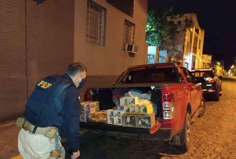 Motorista é preso por crime ambiental ao ser flagrado com pássaros silvestres em Pelotas, RS