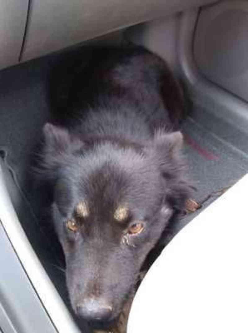 Prisão após assassinato de cães evidencia importância de Lei Sansão