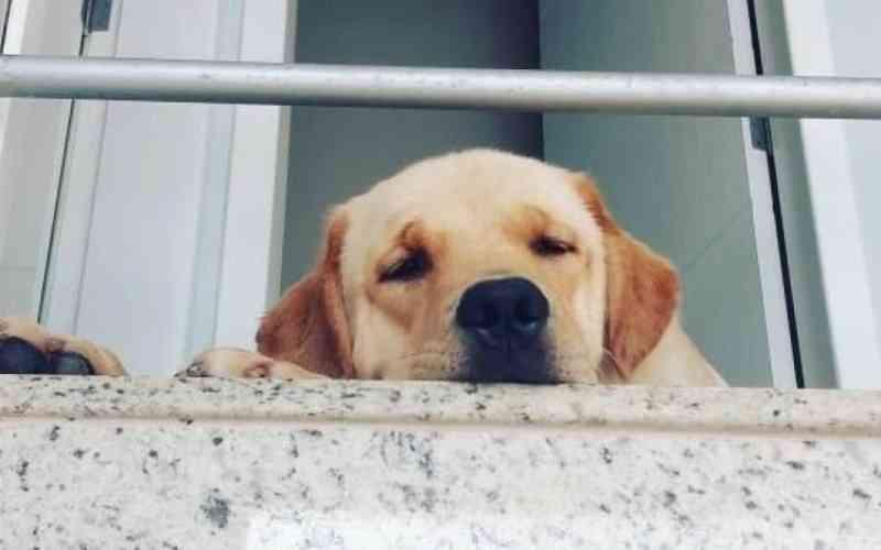 Mulher é condenada por negar tratamento gratuito ao próprio cão em Porto Belo, SC