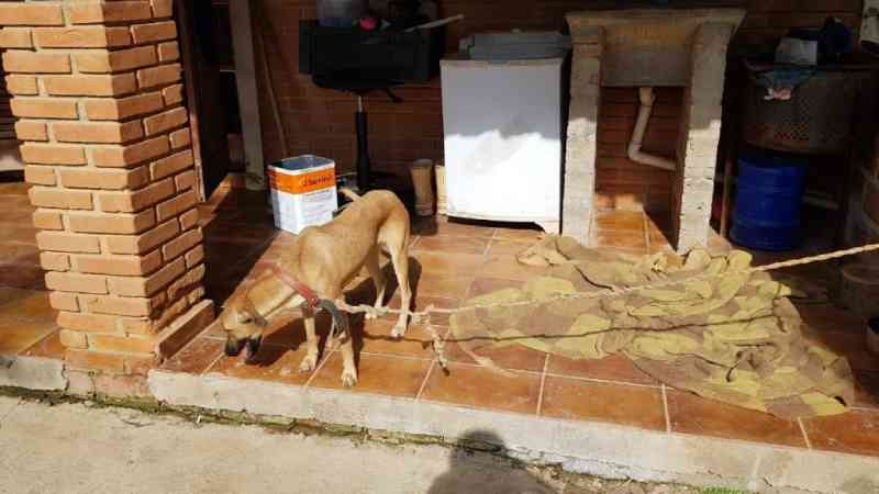 Mulher é presa em flagrante por maus-tratos a animal em Amparo, SP