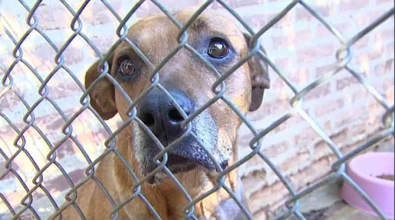 SP: Araraquara, Araras e São Carlos têm mais de mil cães e gatos para adoção responsável