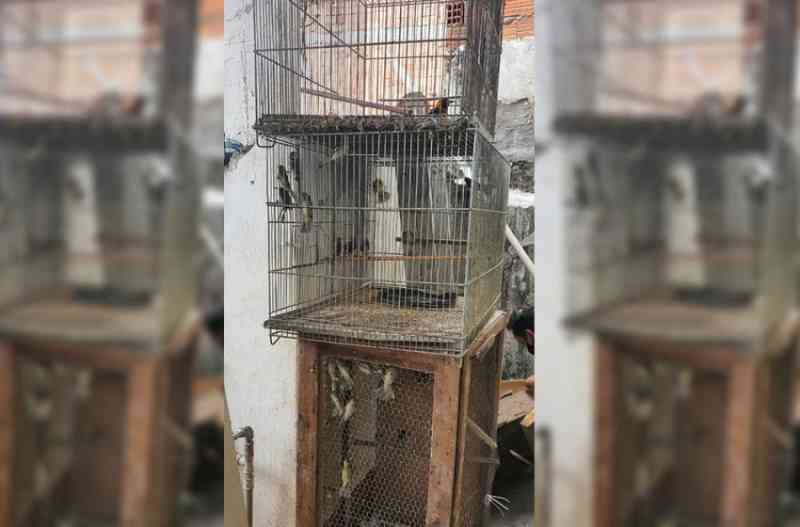 Cetas de Barueri (SP) recebe 203 aves vítimas de maus-tratos e tráfico