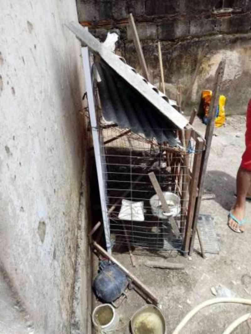 Oito cachorros e duas galinhas são resgatados de maus-tratos em Caraguatatuba, SP