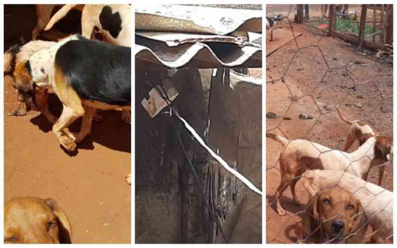 Homem é preso por maltratar dez cachorros em Guaíra, SP