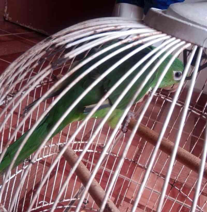 Mulher é multada por maus-tratos a ave mantida em cativeiro em Guareí, SP