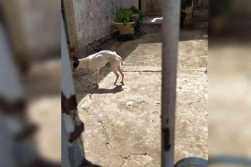 Cachorrinha vítima de maus-tratos morre após ser encontrada amarrada em poste em Limeira, SP
