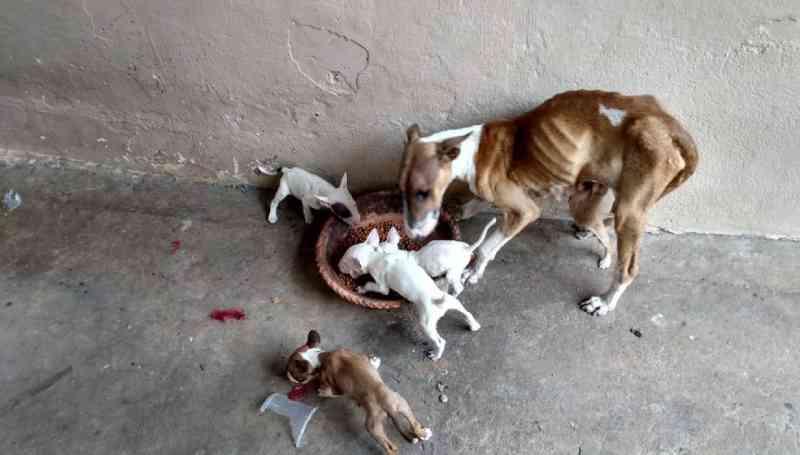 MP pede perícia para identificar maus-tratos em animais em Limeira, SP