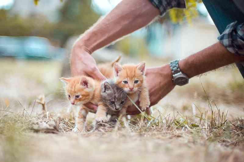 Prefeitura disponibiliza cadastro online para castração de animais em Lins, SP