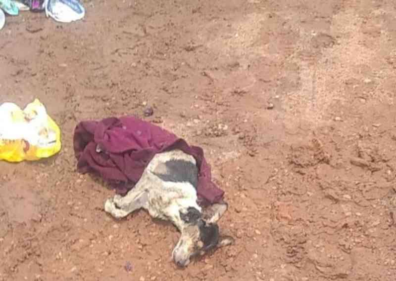 Cachorro é encontrado por coletores após ser jogado em caminhão de lixo em Potirendaba, SP