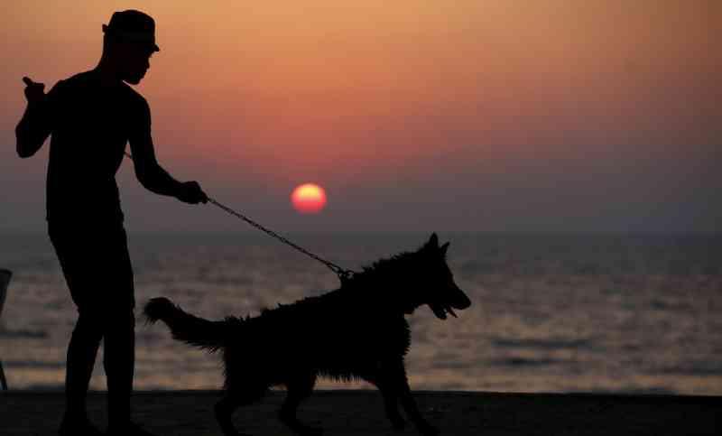 Projeto de lei que libera cães nas praias de Santos (SP) é aprovado em primeira discussão