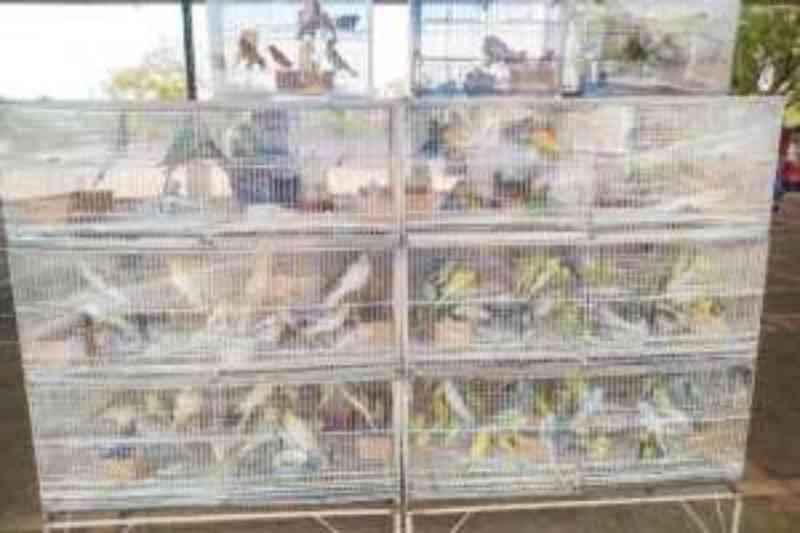 GCM resgata mais de 500 aves em São Bernardo do Campo, no ABC Paulista