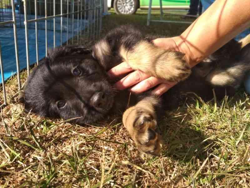 Blitz educativa sobre abandono de animais é realizada em Sorocaba, SP