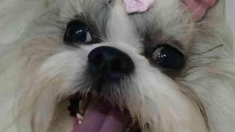 Mulher registra queixa contra pet shop por morte de cachorra de estimação em atropelamento em Sorocaba, SP