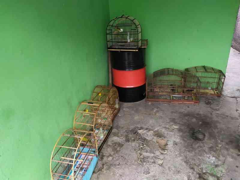 Polícia Ambiental apreende 23 aves mantidas em cativeiro em Votorantim, SP