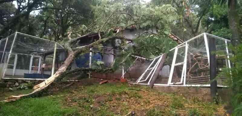 Abrigo de ONG fica destruído após ser atingido por árvore durante temporal; 4 animais morreram