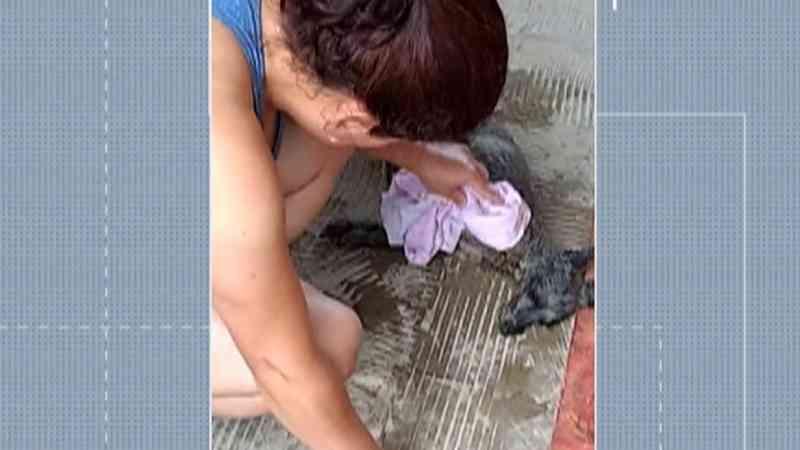 Tutora faz massagem cardíaca e consegue salvar cadela; suspeita é de envenenamento