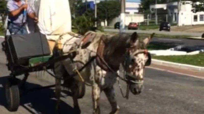 Ministério Público aciona Justiça pelo fim das carroças em Guaratinguetá, SP