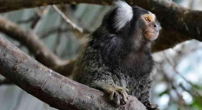 Maus-tratos aos animais crescem 26,5% no estado de SP em 2020