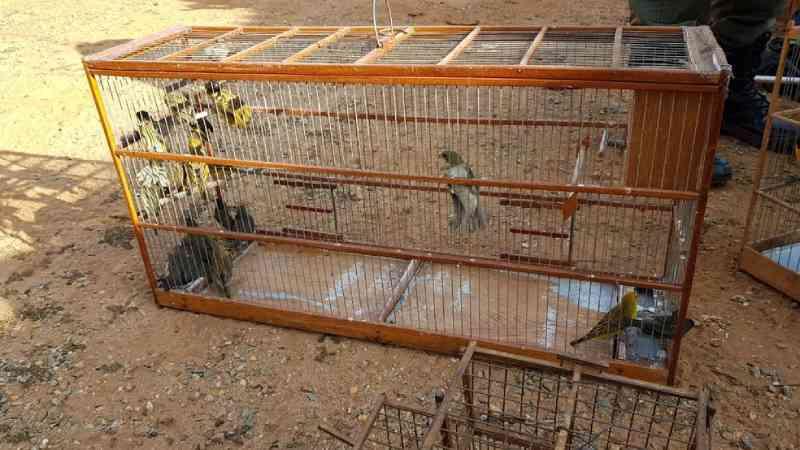 PF de SP faz operação contra tráfico de animais silvestres e prende um dos maiores contrabandistas do país