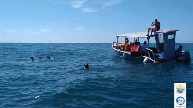 Pinguins-de-Magalhães reabilitados no Instituto Argonauta são devolvidos em alto-mar