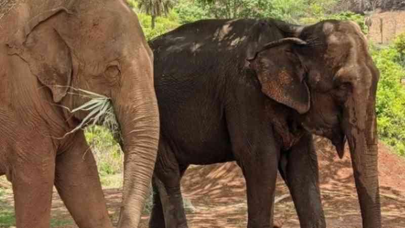 Inacreditável! Promotor pede retorno da elefanta Bambi para o zoológico de Ribeirão Preto, SP