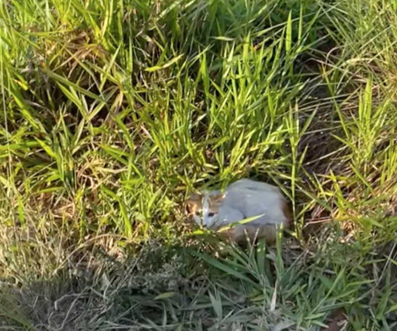 Gato foi encontrado próximo ao local em que van foi queimada em Cidade Tiradentes — Foto: Equipe Delegado Bruno Lima/ Cadeia Para Maus-tratos