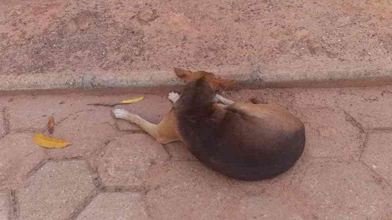Suspeito ferir cachorro com tiro de espingarda é preso no interior do Tocantins