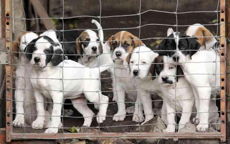 Documentário polêmico sobre criação de cães gera revolta e petição com mais de 60 mil assinaturas tenta cancelar exibição