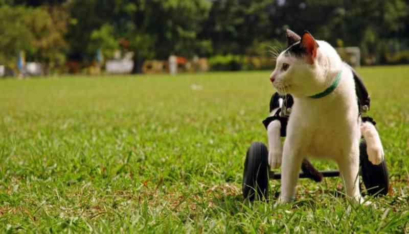Inclusão de animais com deficiência física: acessibilidade no mundo animal