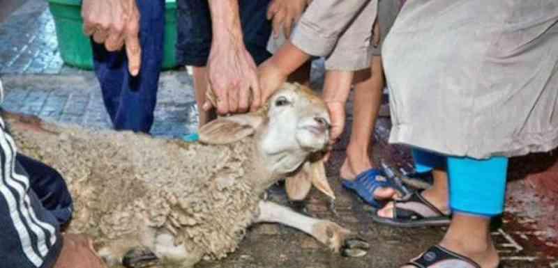 Justiça europeia deu um revés para sacrifícios de animais com fins religiosos