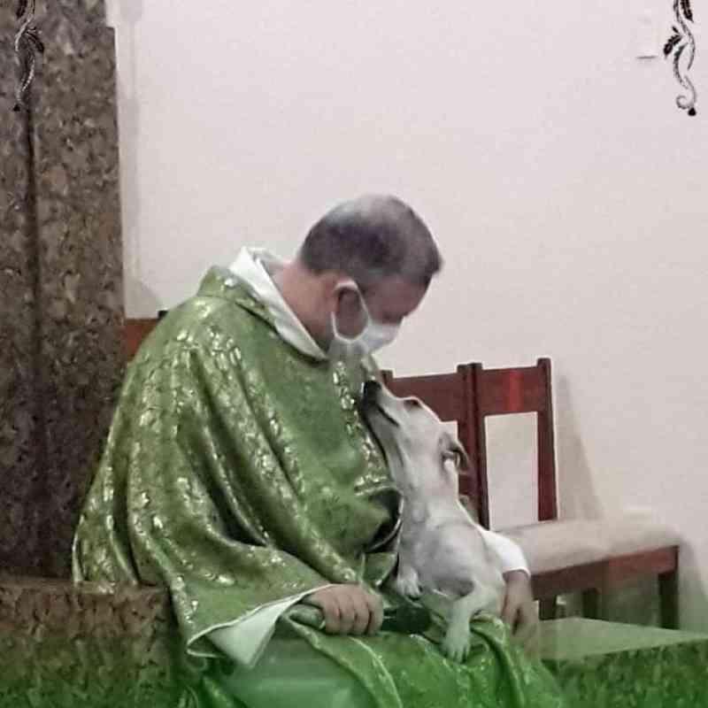 Padre abre as portas de sua igreja para ajudar cachorros de rua