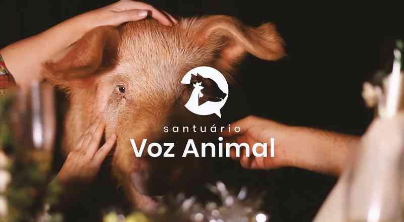 Santuário lança comercial de Natal estrelado por porco