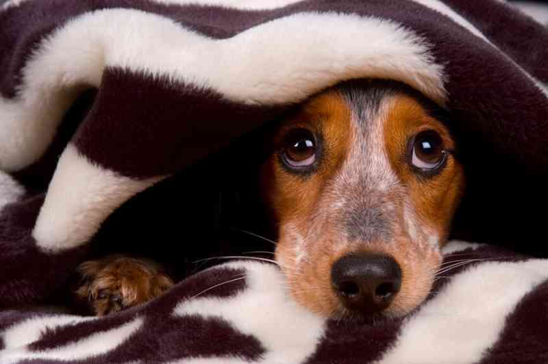 Veterinária alerta para riscos com 'pets' cardiopatas durante festas de fim de ano