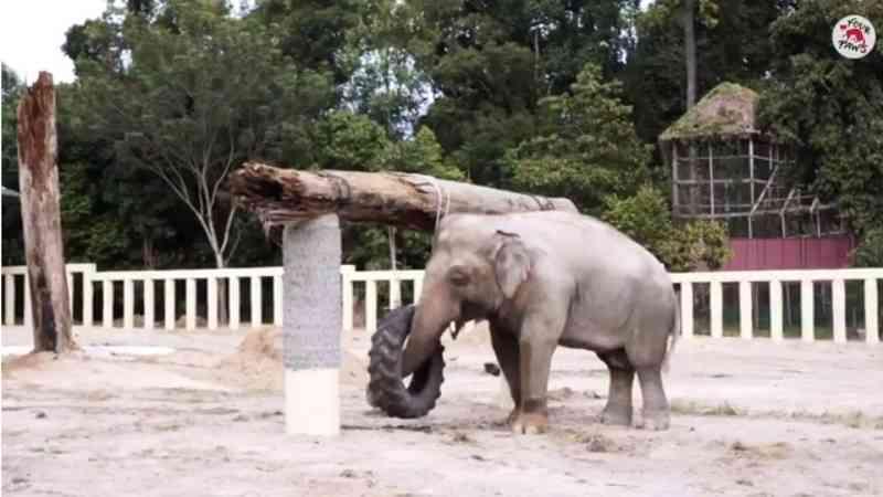 Vídeo mostra 'elefante solitário' chegando em santuário