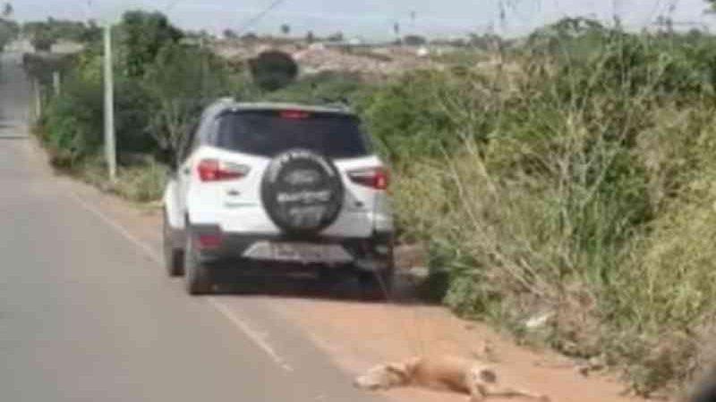 Polícia procura motorista que arrastou cachorro amarrado no carro em Arapiraca, AL
