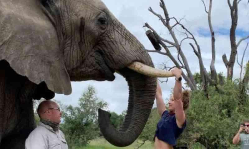 Empresária faz exercícios em presas de elefante e recebe inúmeras críticas