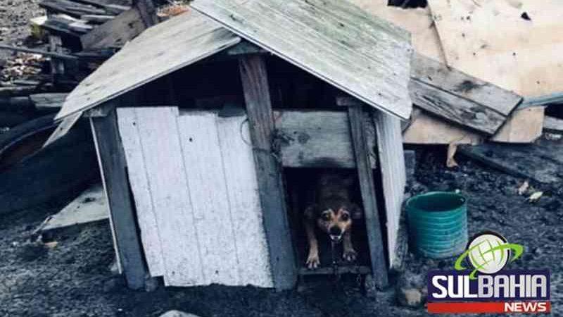 Vídeo: ONG encontra oito animais em situação de maus-tratos em Teixeira, BA