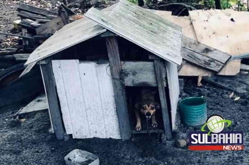 Vídeo: ONG encontra oito animais em situação de maus-tratos em Teixeira de Freitas, BA