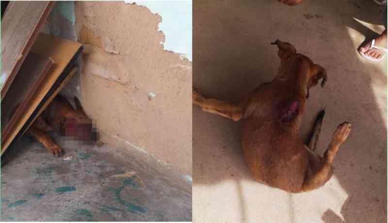 Homem é conduzido à Delegacia de Valente (BA) acusado de ferir cachorro a golpes de facão